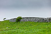 Traditional dry stone wall in meadow in The Burren, County Clare, West of Ireland
