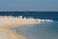 A group of pelicans gather at Indian Key during low tide. Indian Key is a popular place to stop while exploring the 10,000 islands unit of Everglades National Park.<br /> <br /> Date Taken: 12/13/2014