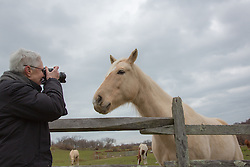 mature woman photographing a horse behind a wooden fence on a ranch