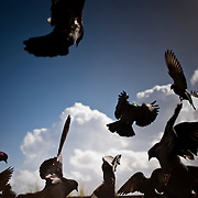 Home to hundreds of pigeons, Parque de las Palomas (Pigeon's Park), is located near the Paseo de la Princesa in Old San Juan, Puerto Rico, and is a popular destination for tourists and locals alike.