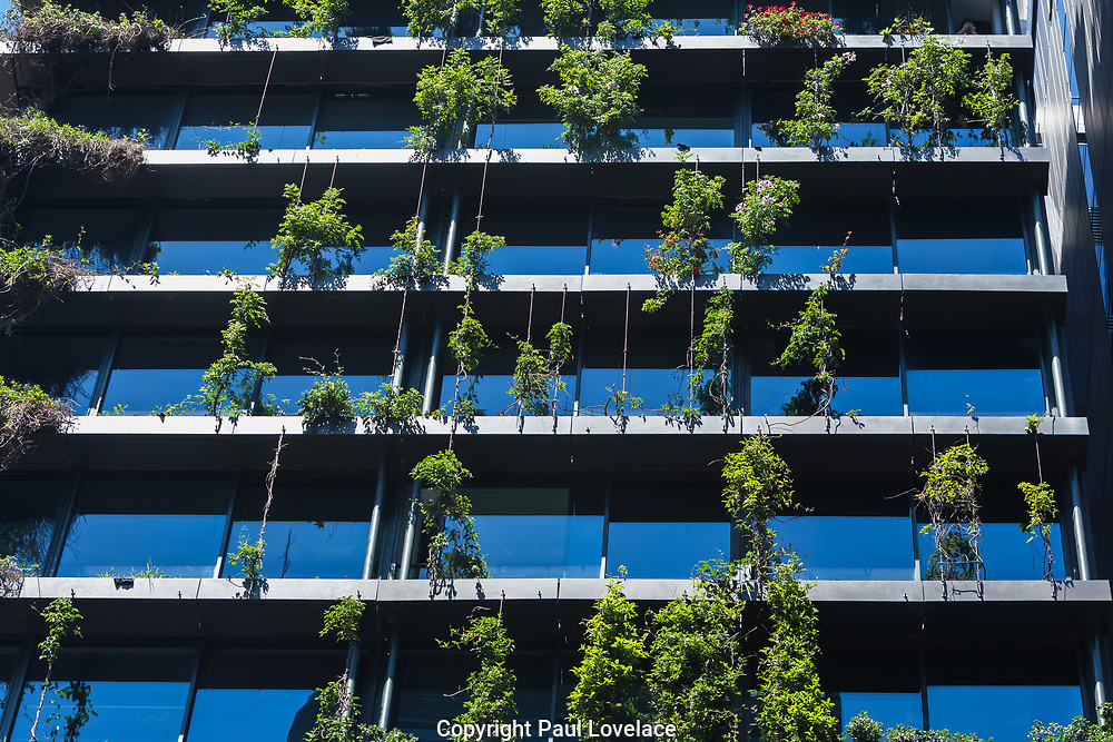 General Views showing One Central Park which is built around Chippendale Green, Sydney. The building itself was designed by award-winning Parisian architect Jean Nouvel and the vertical gardens designed by the artist and botanist Patrick Blanc, Chippendale, Sydney, Australia. The residential building has been named best tall building in the world in June 2014. A massive silver heliostat hangs from One Central Park to redirect light to the ground below. The unique steel heliostat is specifically designed to reflect sunlight to another area. Research shows green infrastructure such as garden walls can play a big role in cooling the city.