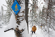 High angle view of a mid adult woman in snowshoes with ski poles walking underneath a snowshoe trail sign in deep powder in Bend, Oregon. (releasecode: jk_mr1035, jk_mr1034) (Model Released)