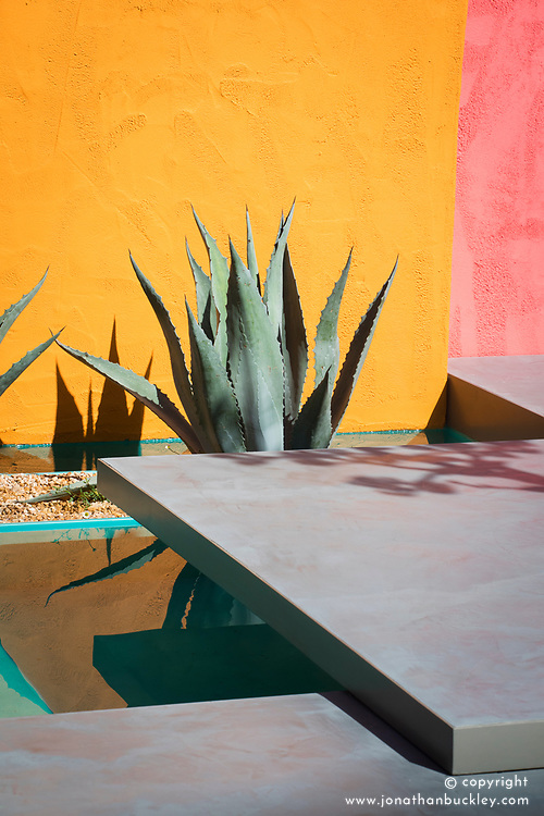 Agave americana<br /> Beneath a Mexican Sky Garden<br /> RHS Chelsea Flower Show 2017<br /> Design: Manoj Malde<br /> Built by: Living Landscapes<br /> Sponsored by: Inland Homes PLC<br /> Photography &copy; Copyright Jonathan Buckley