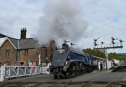 © Licensed to London News Pictures. 20/09/2015. North Yorkshire, UK. People take photographs of the A4 Pacific Class locomotive number 60007 Sir Nigel Gresley at Grosmont Station, North Yorkshire on its final day of running before a major overhaul which may take up to three years at a cost of £600,000. Photo credit : Anna Gowthorpe/LNP