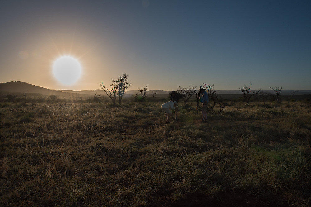 The sun sets over the African bush