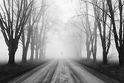 """Let This Dream Take Me"" Self Portrait taken on a foggy back road near Elora, ON"