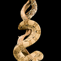 Boa constrictor imperator forme crawl cay