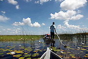 A poler takes tourists around the delta in a traditional Mokoro. Okavango Delta, Botswana, Southern Africa, Africa..© Zute & Demelza Lightfoot.www.lightfootphoto.com