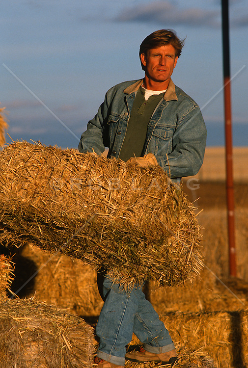 Man at sunset moving a hay bale on a ranch in New Mexico