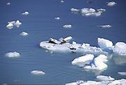 Seals, Columbia Glacier, Alaska<br />