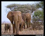 Elephant Family<br /> Samburu National Reserve, Kenya<br /> September 2012