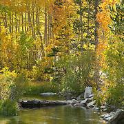 Bishop creek canyon. Bishop. California, USA.