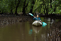 Paddling a kayak through a channel in the mangrove forest.