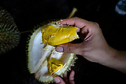 A customer holds a piece of Musang King durian at Durian Kaki, a roadside fruit stall owned by Tan Eow Chong and his family in Bayan Lepas, Pulau Pinang, Malaysia on Sunday, June 16th, 2019. Tan Eow Chong is an award-winning durian farmer famed for his Musang King variety, and last year exported 1000 tons of the fruit to China from his family-run durian empire, expanding from an 80 acre farm to 1000 acres.  Photo by Suzanne Lee/PANOS for Los Angeles Times