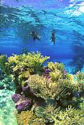 Snorkeling, Rangiroa, French Polynesia<br />