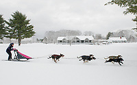 Kelly MacGrath of Wonalancet makes her way through Laconia Country Club during Friday morning's six dog class race action at the 84th Annual Laconia World Championship Sled Dog Derby.  (Karen Bobotas/for the Laconia Daily Sun)