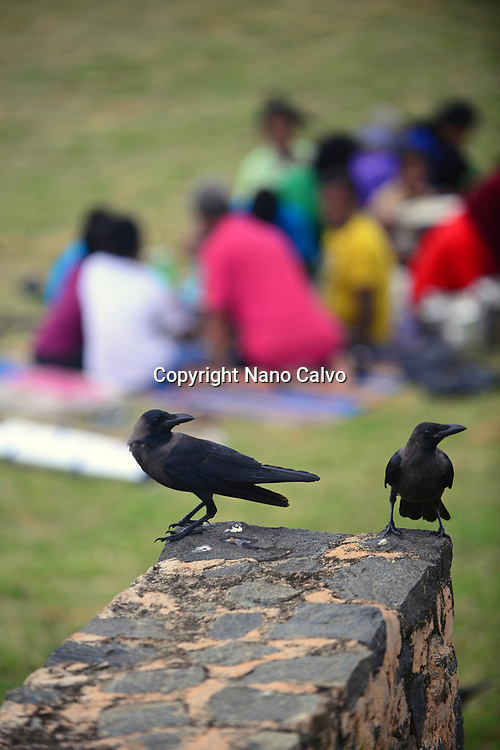 Black crows and group of people in Galle fort, Sri Lanka