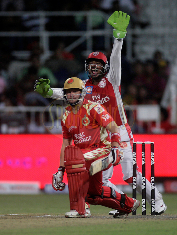 DURBAN, SOUTH AFRICA - 1 May 2009. Kumar Sangakkara appeals against Roelof van der Merwe during the IPL Season 2 match between Kings X1 Punjab and the Royal Challengers Bangalore held at Sahara Stadium Kingsmead, Durban, South Africa.