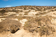 Inland sand dune landscape, La Isla Graciosa, Lanzarote, Canary Islands, Spain