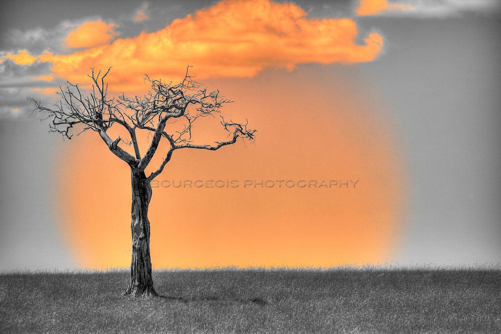 Black and white tree on the Masai Mara Serengeti