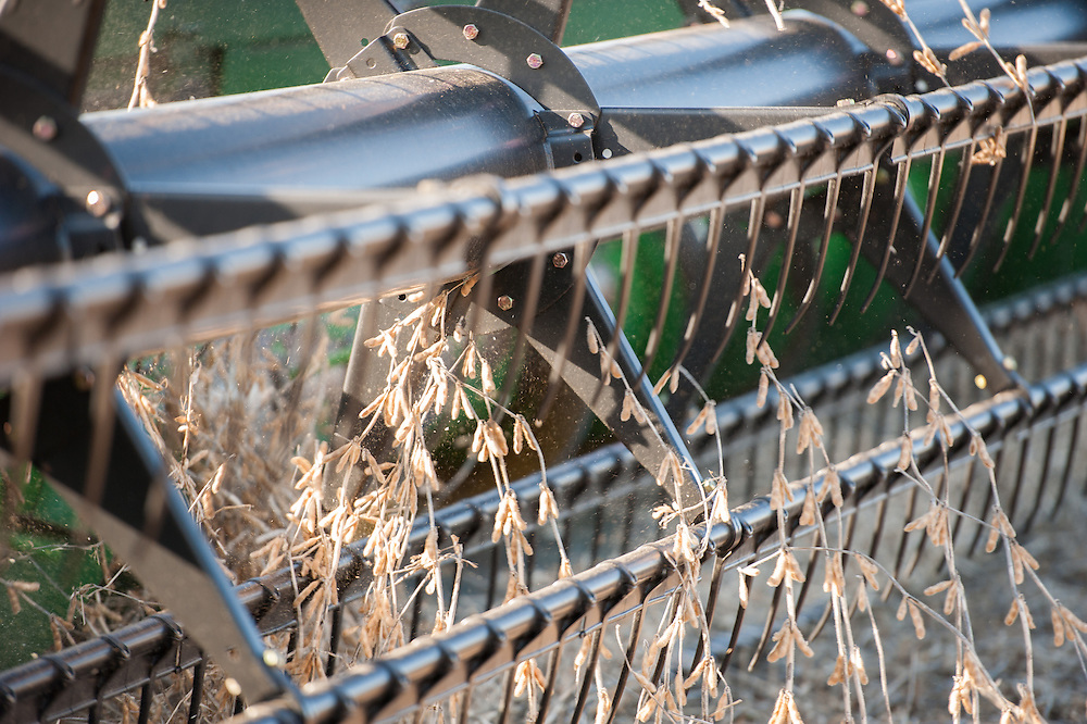 Close-up of combine harvesting soybeans in Jarrettsville, Maryland, USA