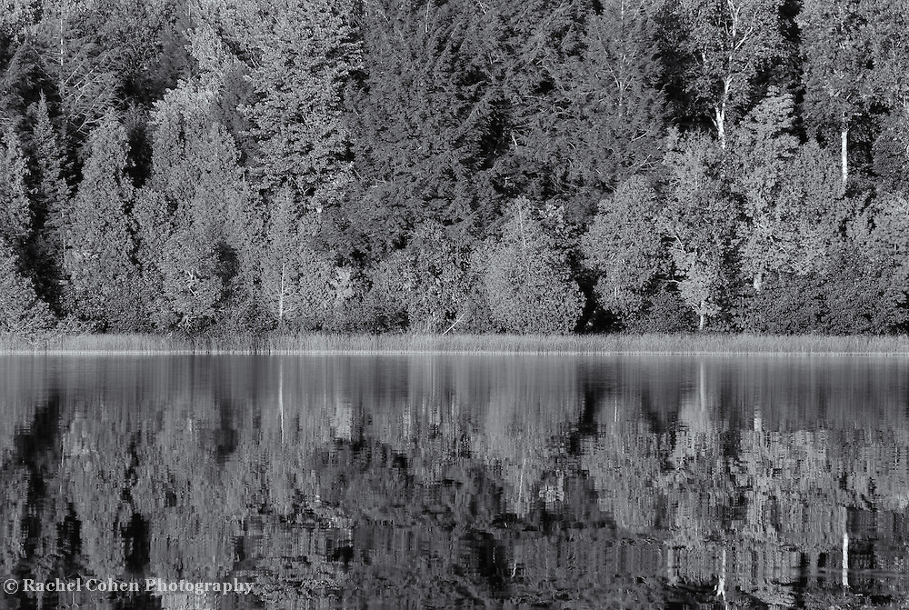 &quot;Brevort Lake in Reflection&quot; mono<br />