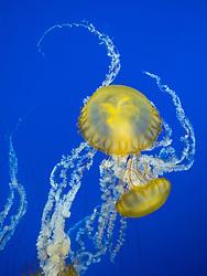 United States, Washington, Tacoma, Point Defiance Zoo
