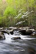 66745-04211 Dogwood trees in spring along Middle Prong Little River, Tremont Area, Great Smoky Mountains National Park, TN