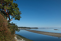 A native Arbutus Tree leans over the ocean and sandbar in Cordova Bay, on the Saanich Pennisula near Victoria, BC.