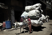 "Young  ""Zabbaleen"" collector back to Mokattam with his carriage loaded with bags of rubbish from the center of Cairo. The quarry was originally located where the settlement of Mokattam, is now used for storage of paper and aluminum.On the outskirts of Cairo in the middle of Manshiet Nasr neighborhood is located Mokattam settlement known as ""Garbage City"" is inhabited by Zabbaleen, a community of about 45,000 Coptic Christians living for decades to recycle waste generated by the Egyptian capital: plastic, aluminum, paper and organic waste transformed into compost. Most part of the Association for the Protection of the Environment (APE), an NGO that works in the area, whose objectives are to protect the environment and improve the livelihoods of garbage scavengers in Cairo. According to the UN, the work is done in Mokattam is one of the ten best examples of world environmental improvement. El Cairo , Egypt, June 2011. ( Photo by  Jordi Camí )."