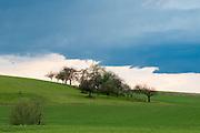 Sreuobstwiese, dunkler Himmel,  Landschaft Vogelsberg, Hessen, Deutschland