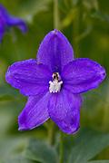 Wild flower, Oxfordshire, United Kingdom