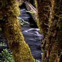 The Willamette National Forest is located in the central portion of the Cascade mountain range in Oregon.