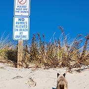 Cat disregarding beach signs. Civil disobedience. Lavalette, New Jersey, USA