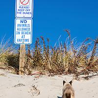 Cat disregarding beach signs. Civil disobedience. Lavalette, New Jersey, USA
