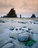 Shi-Shi Beach Olympic National Park Washington