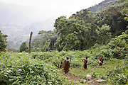 James and other elders of the traditional Batwa pygmies from the Bwindi Impenetrable Forest in Uganda walks one of the well-trodden forest paths. They were indigenous forest nomads before they were evicted from the Bwindi Impenetrable Forest when it was made a World Heritage site to protect the mountain gorillas.  The Batwa Development Program now supports them.