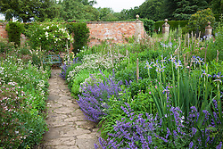 Borders in The Old Garden at Hidcote Manor with nepeta and iris. Arch with honeysuckle and Rosa 'Goldfinch'