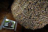 DEU, Deutschland: Biene, Honigbiene (Apis mellifera), Natürliches Bienennest in einer Holzhütte, Imkermeister Dirk Ahrens-Lagast, mit Schutzkleidung schaut durch die Einflugluke, Koloniegrösse ca. 50.000 Tiere im Sommer, im Winter 20.000, Bienenstation an der Bayerischen Julius-Maximilians-Universität Würzburg | DEU, Germany: Bee, Honey-bee (Apis mellifera), natural beenest in a wooden hut in the garden of the Beestation, beekeeper Dirk Ahrens-Lagst with bee protection clothes looking through the opening where bees fly in and out, average colony exists out of 50.000 bees in summer and 20.000 in winter, Beestation at the Bavarian Julius-Maximilians-University Würzburg