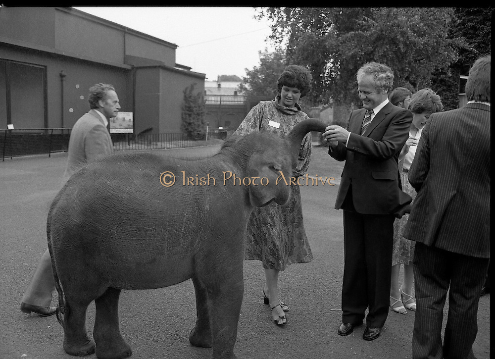 Baby Elephants presented To Dublin Zoo.  (M82)..1979..18.07.1979..07.18.1979..18th July 1979..H.B. Ice Cream yesterday presented two baby elephants from Thailand to the Zoological Gardens, Phoenix Park, Dublin..In acknowledging the gift, Mr Terry Murphy,Director of the Zoo, said that they had been without an elephant of their own for some time. The one currently there was on loan from a zoo in England and would be returned there shortly.. Hearing this H B decided to sponsor the importation of the two young elephants from Bangkok, Thailand..Picture of Ms Mitch O'Sullivan and Mr Ted Murphy getting to know the baby elephant at Dublin Zoo.