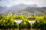 Two glasses of white wine sitting on a ledge next to a vineyard near Franschhoek, South Africa. The vineyard and surrounding countryside are reflected in the glasses.