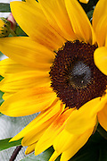 sunflower bouquet