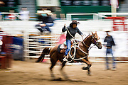 "01 SEPTEMBER 2011 - ST. PAUL, MN:  A cowgirl leaves the chutes in break away roping during the high school rodeo at the Minnesota State Fair. The Minnesota State Fair is one of the largest state fairs in the United States. It's called ""the Great Minnesota Get Together"" and includes numerous agricultural exhibits, a vast midway with rides and games, horse shows and rodeos. Nearly two million people a year visit the fair, which is located in St. Paul.   PHOTO BY JACK KURTZ"