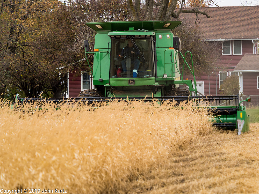 27 OCTOBER 2019 - POLK CITY, IOWA: AARON LEHMAN, President of the Iowa Farmers Union, harvests organic soybeans on his farm near Polk City, Iowa. Iowa farmers have been weeks behind schedule through most of the 2019 growing season. A cold, wet spring across most of the state delayed planting by about 2 weeks. A historically wet October has pushed back the harvest of soybeans and corn by up to 3 weeks. Lehman said he's two weeks behind on his soybean harvest and further behind on corn. The USDA said about 30% of the soybeans have been harvested, and only 15% of the corn has been harvested. Central Iowa normally gets about 2.6 inches of rain in October, this year central Iowa has received about  7.3 inches of rain. Some parts of central Iowa are expecting up to 3 inches of snow later this week, further pushing back the harvests. This year has been the wettest year on record in Iowa. Farmers have also been contending with low prices, brought on by trade war between the US and China. The Chinese government put retaliatory tariffs on US agricultural products and cut back on orders of soybeans, corn, and pork, all important Iowa agricultural products. Soybean prices have fallen by as much as 20%.            PHOTO BY JACK KURTZ