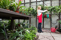 Side view of a senior florist spraying pesticide in greenhouse