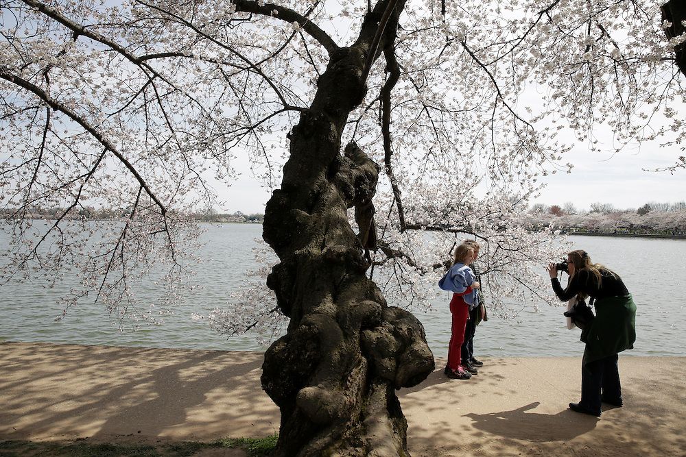 A woman photographs children under blooming cherry trees along the tidal bason in Washington March 23, 2016.      REUTERS/Joshua Roberts