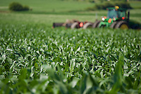 Selective focus image of corn field in summer with out of focus tractor in background, Uxbridge, Ontario, Canada.