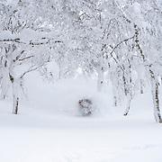 Nick Larson, Rusutsu Japan.