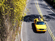 Yellow cab in the transverse road through Central Park, New York City