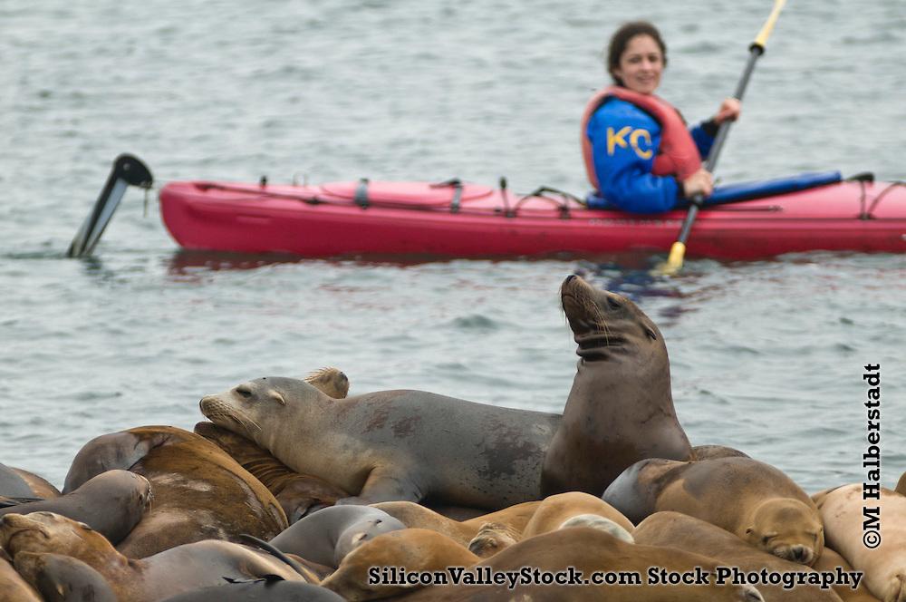 Seals on Pier, Moss Landing, Moterey Bay, California